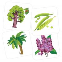 Пример карточек из набора «Ботанический сад»