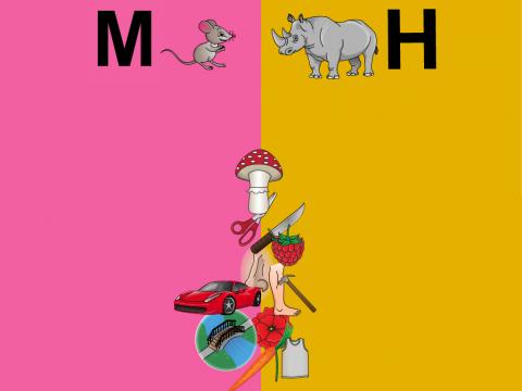«Картинки для мышки и носорога.», бесплатное пособие для дифференциации звуков