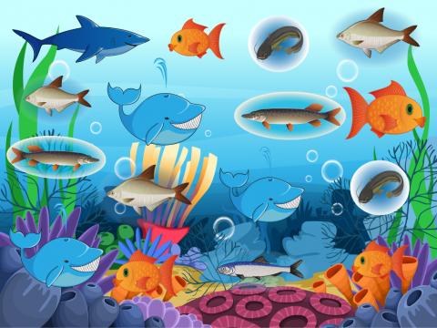 Найди одинаковые рыбы